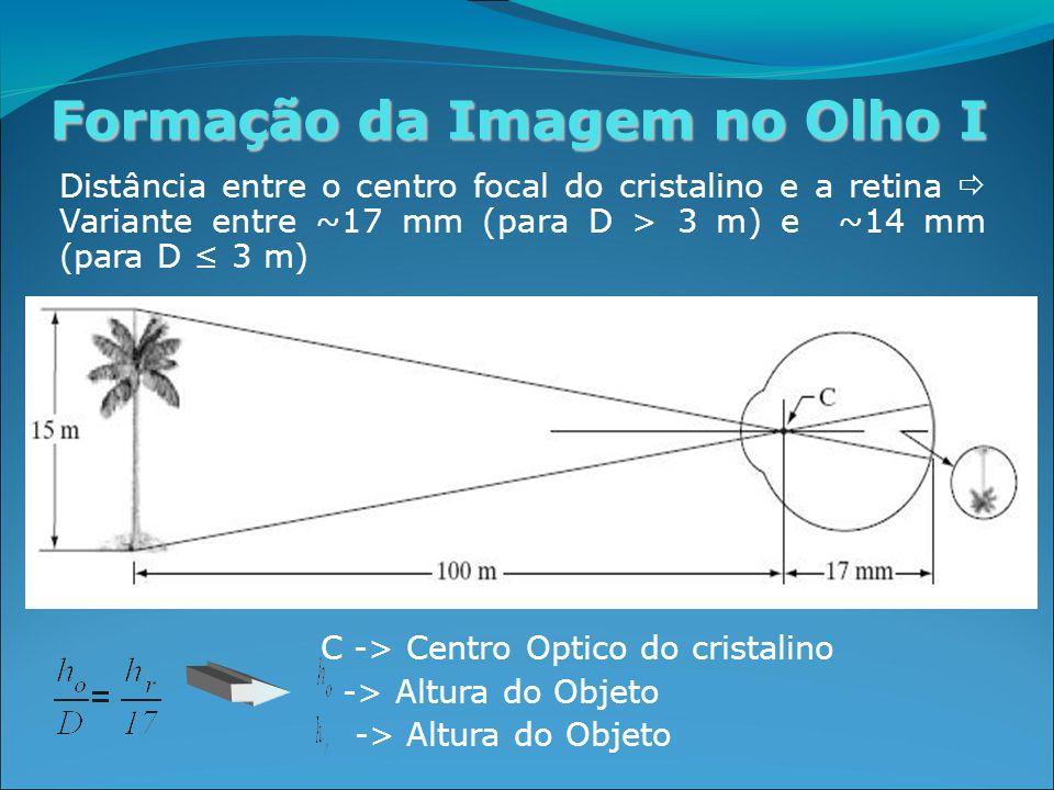 Formação da Imagem no Olho I Distância entre o centro focal do cristalino e a retina  Variante entre ~17 mm (para D > 3 m) e ~14 mm (para D ≤ 3 m) C -> Centro Optico do cristalino -> Altura do Objeto