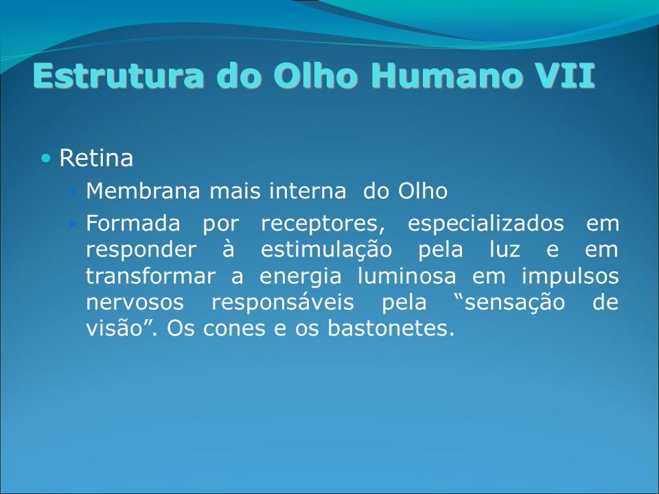Estrutura do Olho Humano VII Retina Membrana mais interna do Olho Formada por receptores, especializados em responder à estimulação pela luz e em transformar a energia luminosa em impulsos nervosos responsáveis pela sensação de visão .