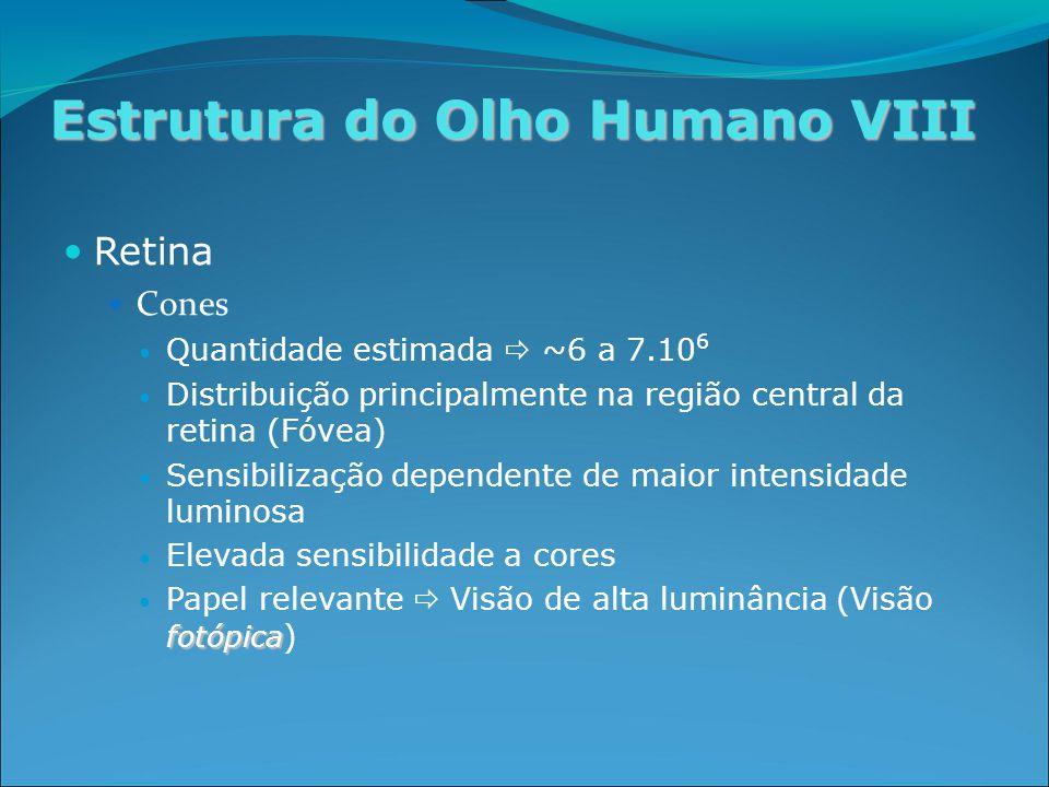 Estrutura do Olho Humano VIII Retina Cones Quantidade estimada  ~6 a 7.10 6 Distribuição principalmente na região central da retina (Fóvea) Sensibilização dependente de maior intensidade luminosa Elevada sensibilidade a cores fotópica Papel relevante  Visão de alta luminância (Visão fotópica )