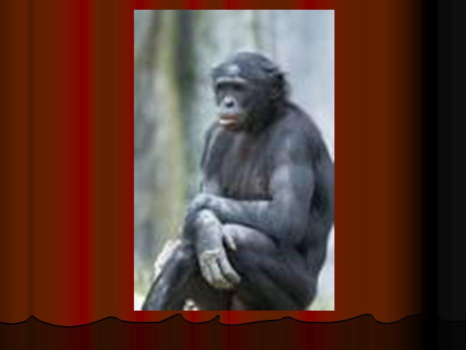 Paul Feyerabend (1924 – 1994) Regras metodológicas não contribuem para o sucesso científico; Regras metodológicas não contribuem para o sucesso científico; Rejeição à existência de regras metodológicas universais; Rejeição à existência de regras metodológicas universais; Melhor uma certa dose de anarquismo teórico ; Melhor uma certa dose de anarquismo teórico ; Entre duas teorias de igual poder de explicação, aquela compatível coma velha teoria tem vantagem (escolha mais estética do que racional).