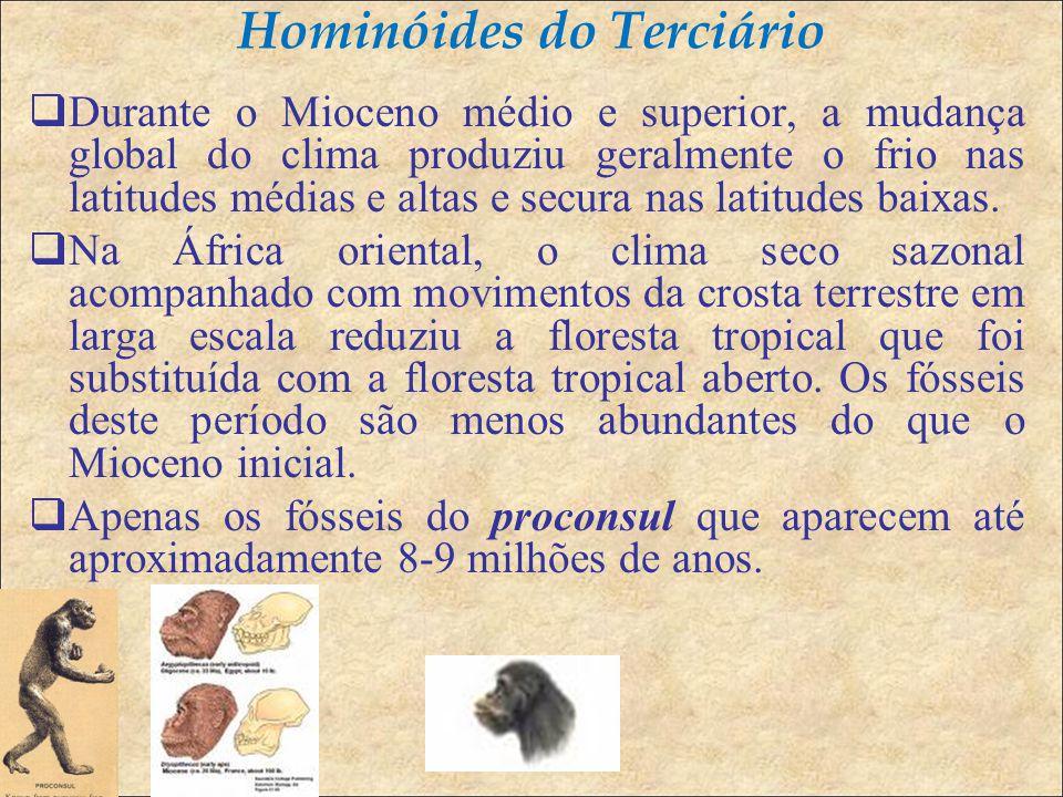 Hominóides do Terciário  Durante o Mioceno médio e superior, a mudança global do clima produziu geralmente o frio nas latitudes médias e altas e secura nas latitudes baixas.