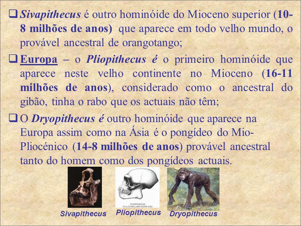  Sivapithecus é outro hominóide do Mioceno superior (10- 8 milhões de anos) que aparece em todo velho mundo, o provável ancestral de orangotango;  Europa – o Pliopithecus é o primeiro hominóide que aparece neste velho continente no Mioceno (16-11 milhões de anos), considerado como o ancestral do gibão, tinha o rabo que os actuais não têm;  O Dryopithecus é outro hominóide que aparece na Europa assim como na Ásia é o pongídeo do Mio- Pliocénico (14-8 milhões de anos) provável ancestral tanto do homem como dos pongídeos actuais.