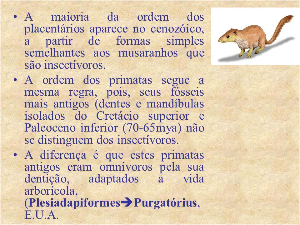 A maioria da ordem dos placentários aparece no cenozóico, a partir de formas simples semelhantes aos musaranhos que são insectívoros.