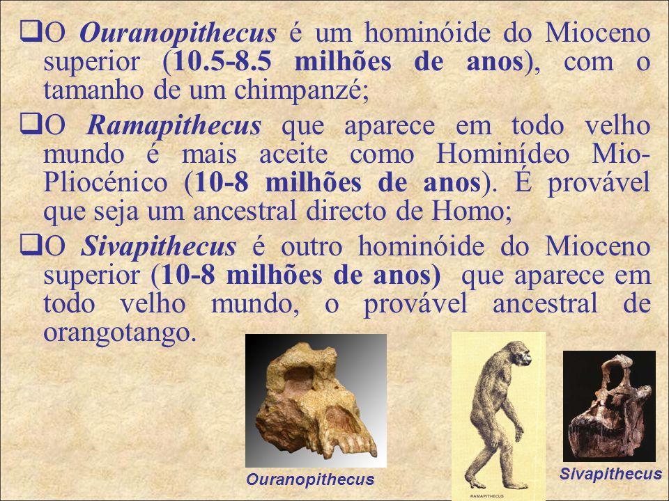  O Ouranopithecus é um hominóide do Mioceno superior (10.5-8.5 milhões de anos), com o tamanho de um chimpanzé;  O Ramapithecus que aparece em todo velho mundo é mais aceite como Hominídeo Mio- Pliocénico (10-8 milhões de anos).