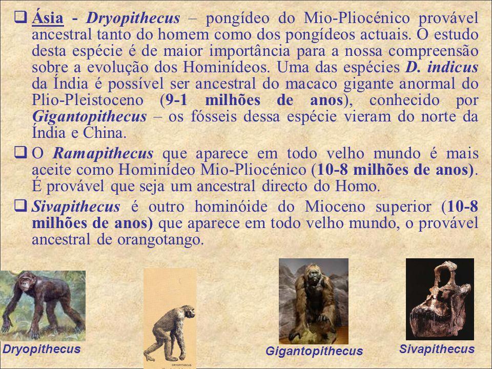  Ásia - Dryopithecus – pongídeo do Mio-Pliocénico provável ancestral tanto do homem como dos pongídeos actuais.