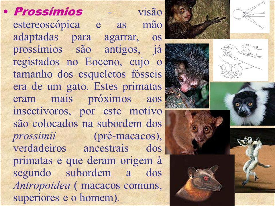 Os prossímios estavam bem espalhados no início do Cenozóico, mas a sua decadência foi de grande rapidez, logo após o aparecimento dos macacos verdadeiros no Oligóceno (35mya), mas não foram totalmente extintos, hoje restringe-se em Madagascar, Ásia tropical e nas Filipinas (Lemuroides, Tarsioides), Aye-Aye.