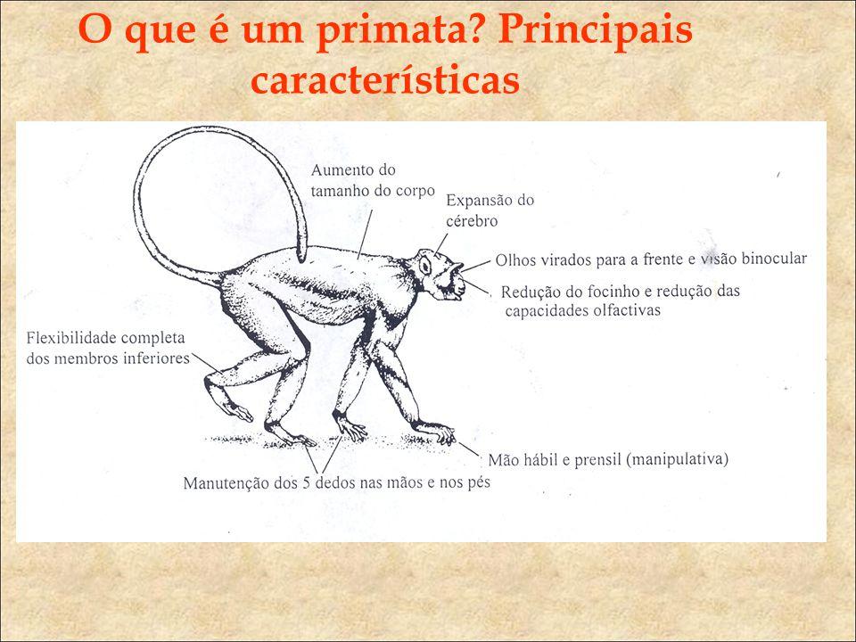 O que é um primata? Principais características