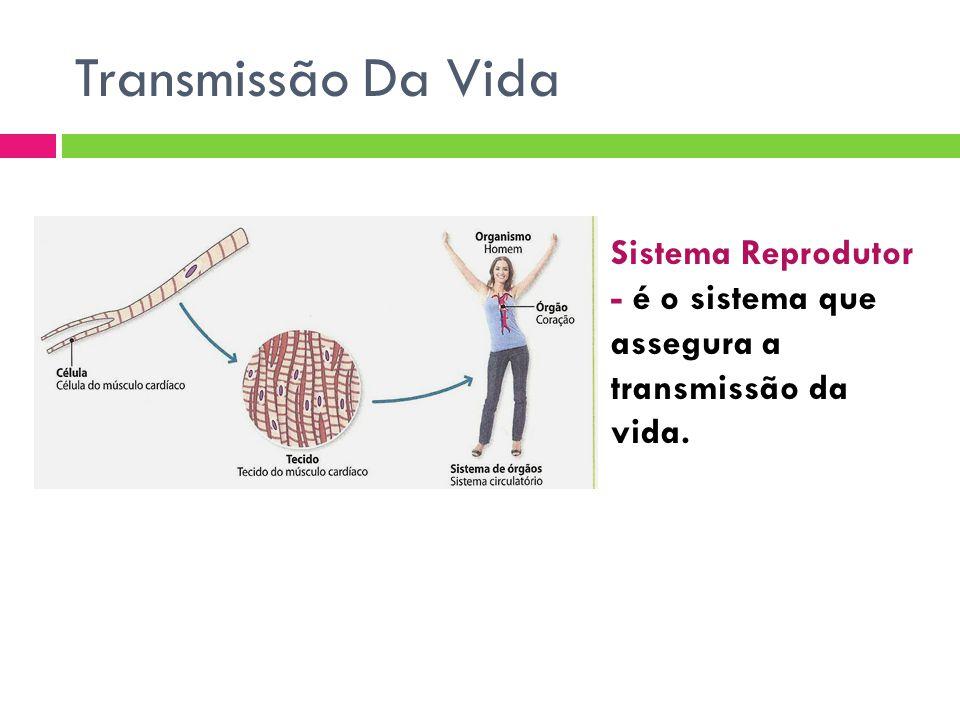 Transmissão Da Vida Sistema Reprodutor - é o sistema que assegura a transmissão da vida.