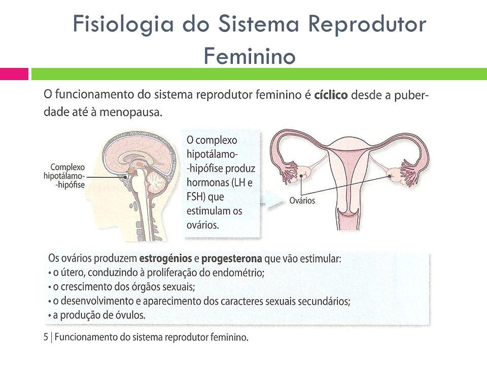 Ciclo Sexual Feminino