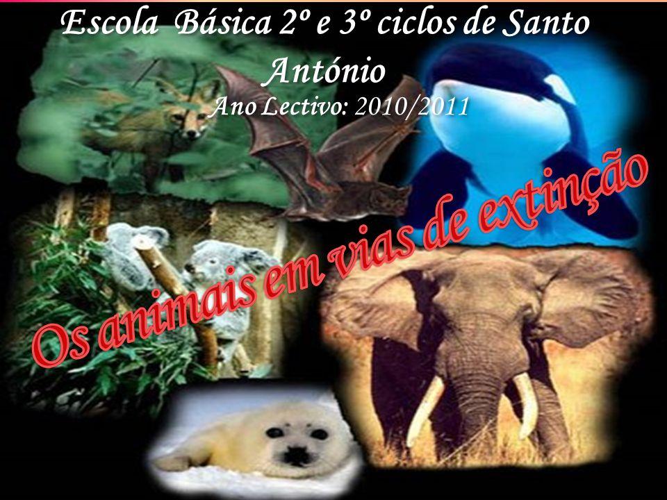 Escola Básica 2º e 3º ciclos de Santo António Escola Básica 2º e 3º ciclos de Santo António Ano Lectivo: 2010/2011 Ano Lectivo: 2010/2011