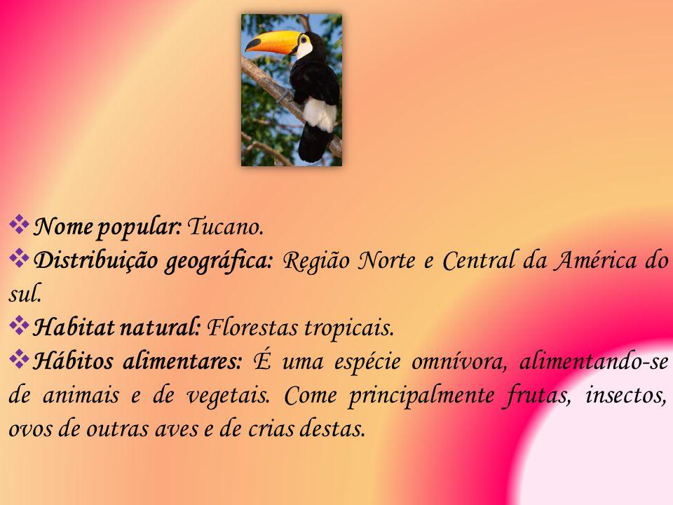  Nome popular: Tucano.  Distribuição geográfica: Região Norte e Central da América do sul.  Habitat natural: Florestas tropicais.  Hábitos aliment