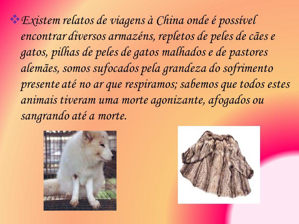  Existem relatos de viagens à China onde é possível encontrar diversos armazéns, repletos de peles de cães e gatos, pilhas de peles de gatos malhados