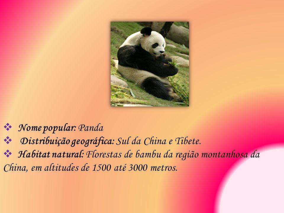  Nome popular: Panda  Distribuição geográfica: Sul da China e Tibete.  Habitat natural: Florestas de bambu da região montanhosa da China, em altitu