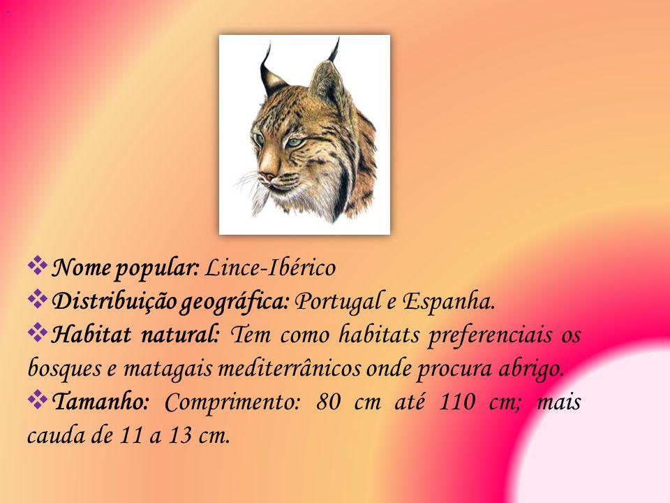  Nome popular: Lince-Ibérico  Distribuição geográfica: Portugal e Espanha.  Habitat natural: Tem como habitats preferenciais os bosques e matagais