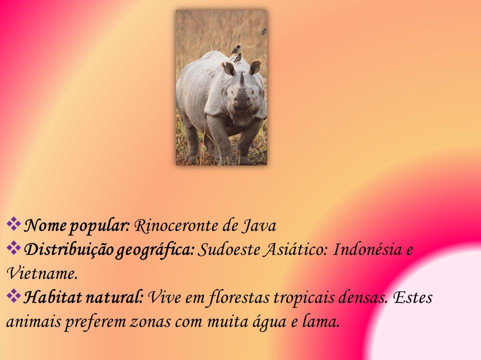 Nome popular: Rinoceronte de Java  Distribuição geográfica: Sudoeste Asiático: Indonésia e Vietname.  Habitat natural: Vive em florestas tropicais