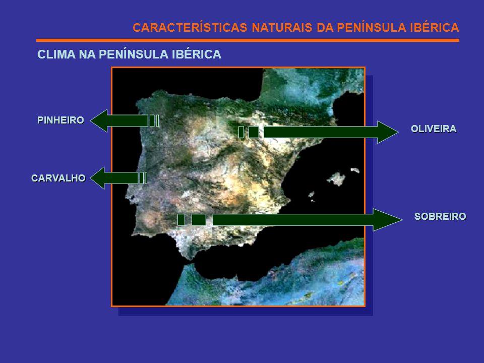 CLIMA NA PENÍNSULA IBÉRICA CARACTERÍSTICAS NATURAIS DA PENÍNSULA IBÉRICA OLIVEIRA SOBREIRO PINHEIRO CARVALHO