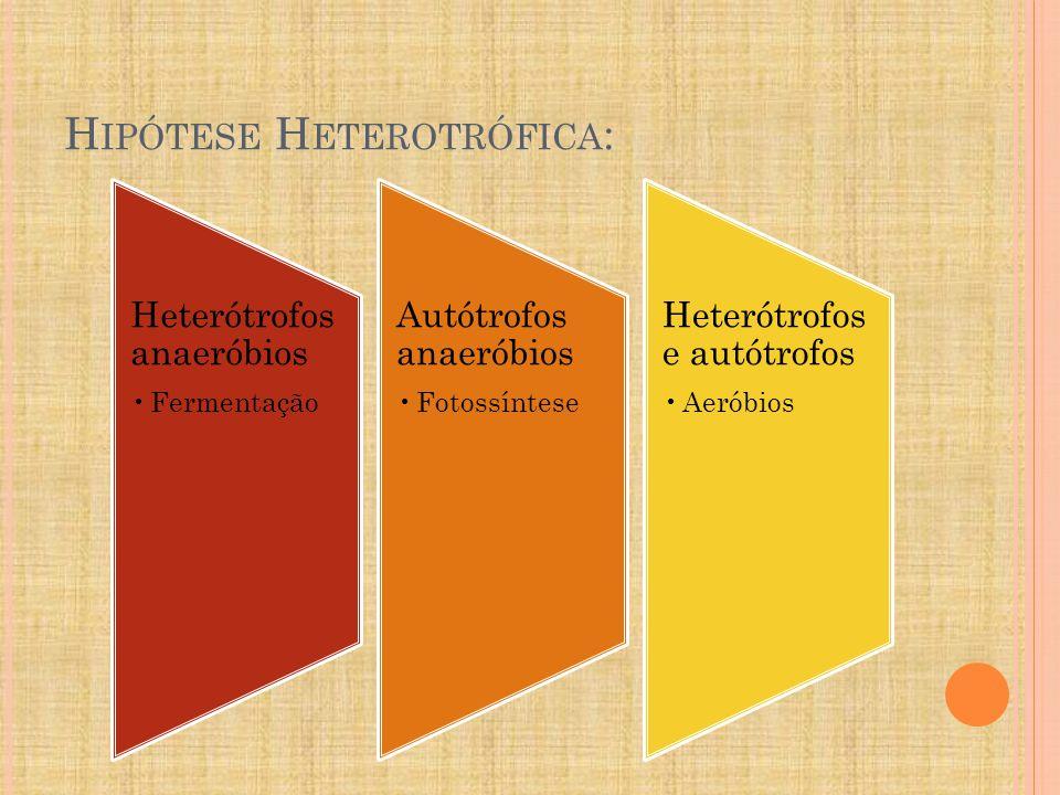 H IPÓTESE H ETEROTRÓFICA : Heterótrofos anaeróbios Fermentação Autótrofos anaeróbios Fotossíntese Heterótrofos e autótrofos Aeróbios
