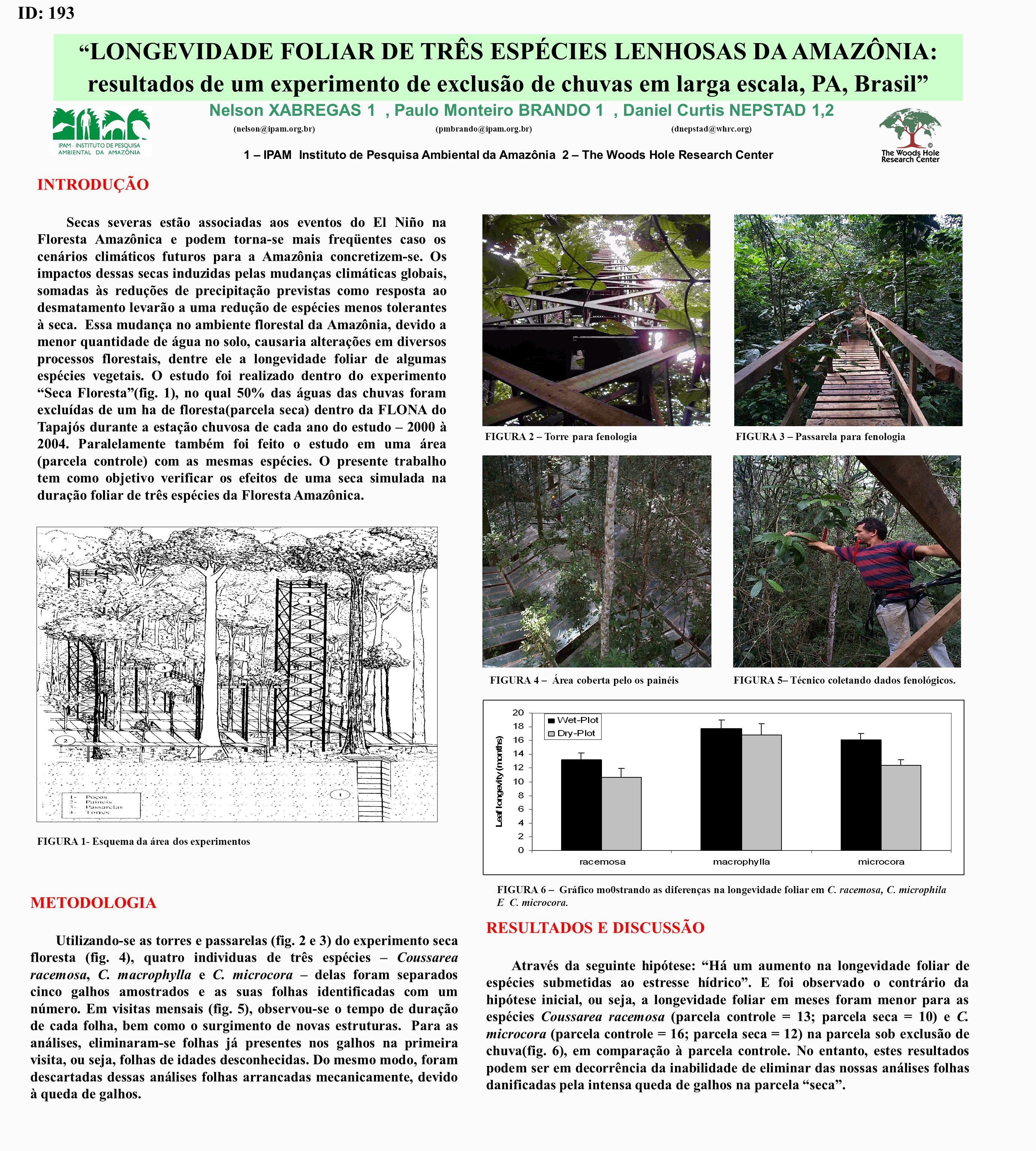 Nelson XABREGAS 1, Paulo Monteiro BRANDO 1, Daniel Curtis NEPSTAD 1,2 1 – IPAM Instituto de Pesquisa Ambiental da Amazônia 2 – The Woods Hole Research Center LONGEVIDADE FOLIAR DE TRÊS ESPÉCIES LENHOSAS DA AMAZÔNIA: resultados de um experimento de exclusão de chuvas em larga escala, PA, Brasil INTRODUÇÃO Secas severas estão associadas aos eventos do El Niño na Floresta Amazônica e podem torna-se mais freqüentes caso os cenários climáticos futuros para a Amazônia concretizem-se.