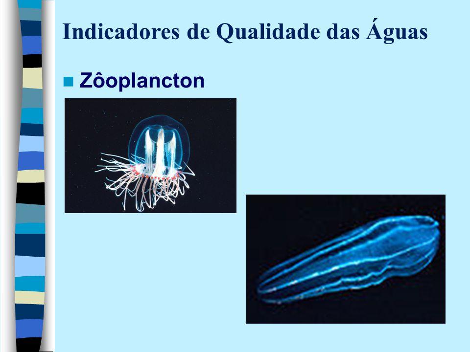 Zôoplancton Indicadores de Qualidade das Águas