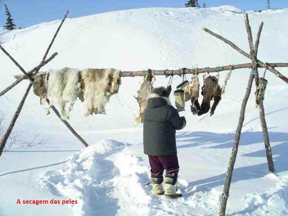 Caça tradicional de focas