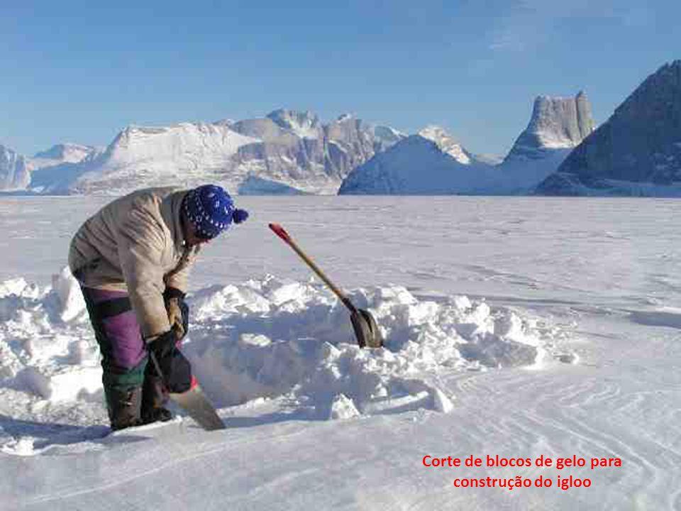 Corte de blocos de gelo para construção do igloo