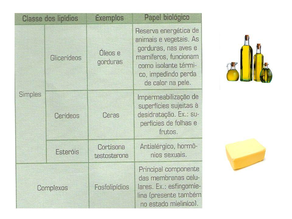 Carboidratos Glicídios ou Açúcares: são fundamentais, pois dão energia às células e ao organismo.