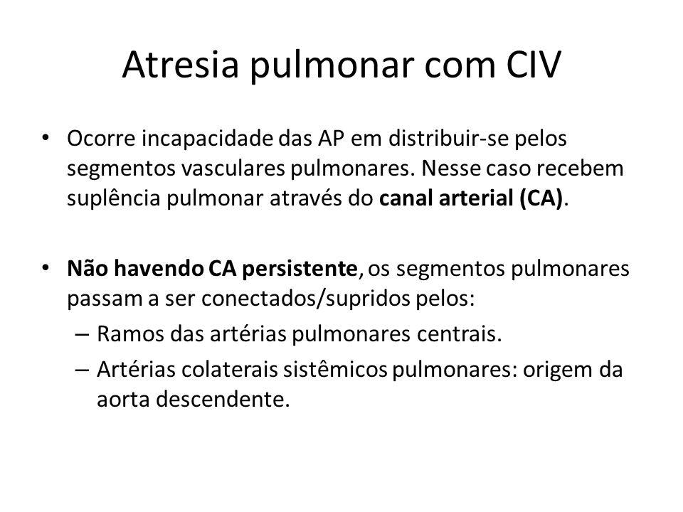 Atresia pulmonar com CIV Ocorre incapacidade das AP em distribuir-se pelos segmentos vasculares pulmonares. Nesse caso recebem suplência pulmonar atra