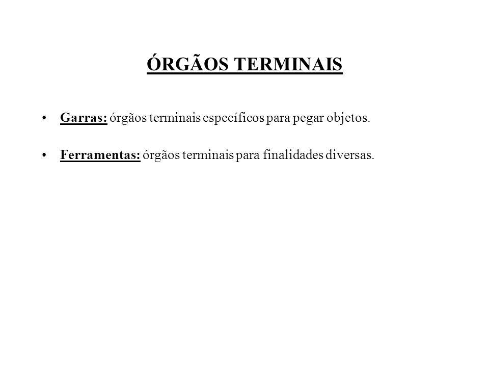 ÓRGÃOS TERMINAIS Garras: órgãos terminais específicos para pegar objetos. Ferramentas: órgãos terminais para finalidades diversas.