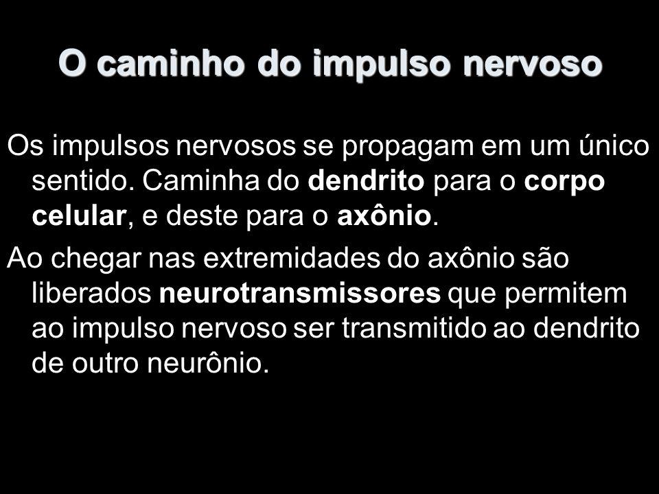 O caminho do impulso nervoso Os impulsos nervosos se propagam em um único sentido.