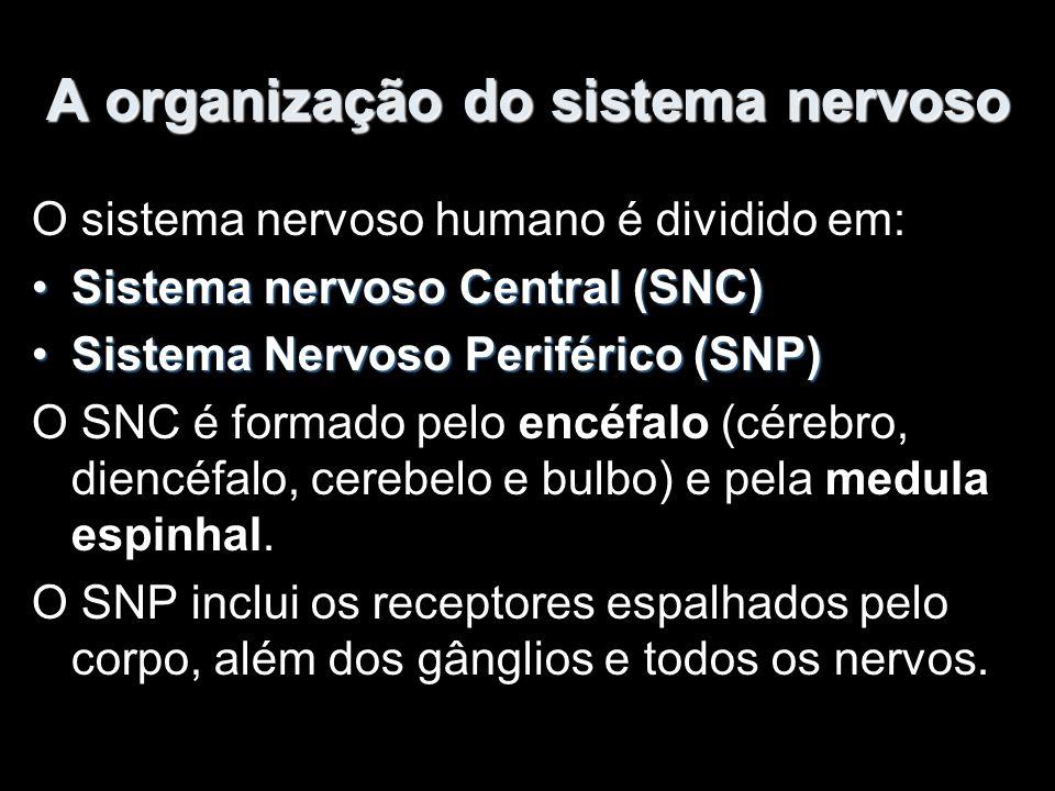 A organização do sistema nervoso O sistema nervoso humano é dividido em: Sistema nervoso Central (SNC)Sistema nervoso Central (SNC) Sistema Nervoso Periférico (SNP)Sistema Nervoso Periférico (SNP) O SNC é formado pelo encéfalo (cérebro, diencéfalo, cerebelo e bulbo) e pela medula espinhal.