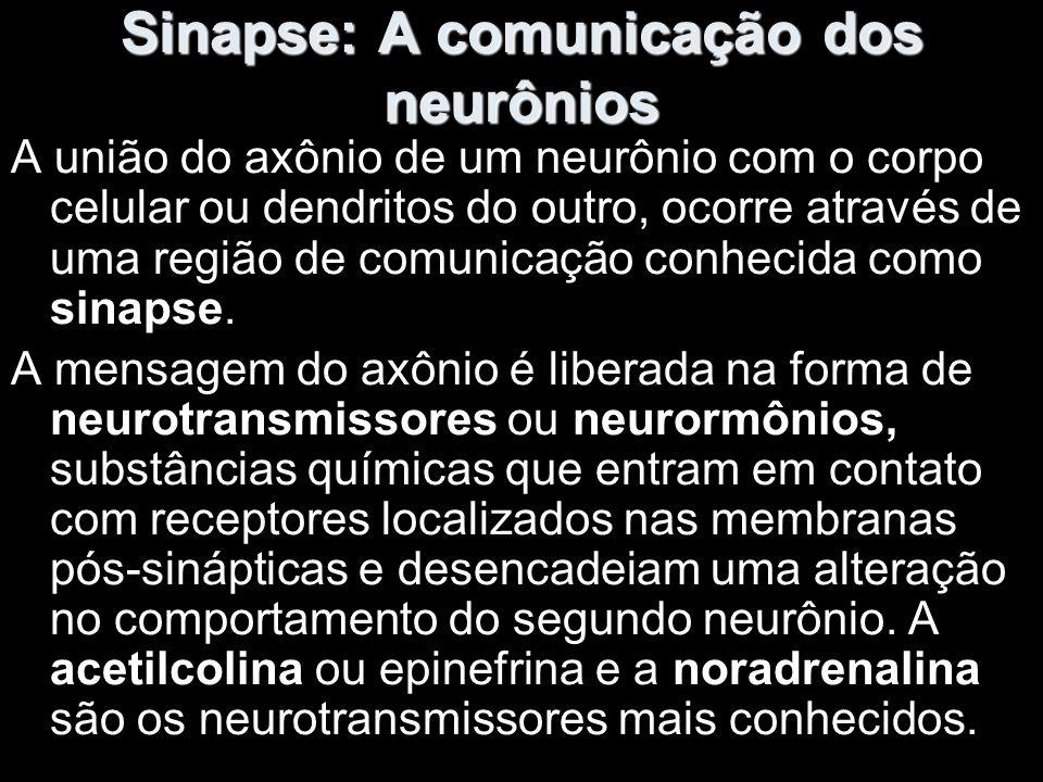 Sinapse: A comunicação dos neurônios A união do axônio de um neurônio com o corpo celular ou dendritos do outro, ocorre através de uma região de comunicação conhecida como sinapse.
