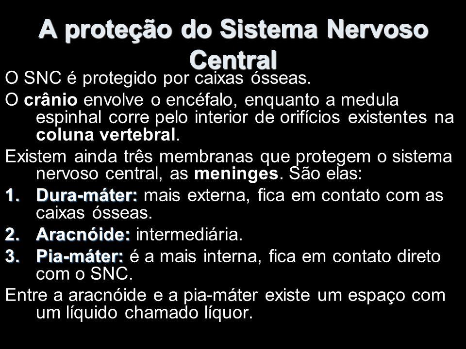 A proteção do Sistema Nervoso Central O SNC é protegido por caixas ósseas.