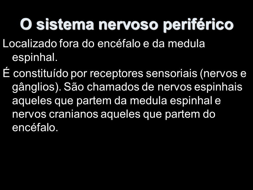 O sistema nervoso periférico Localizado fora do encéfalo e da medula espinhal.
