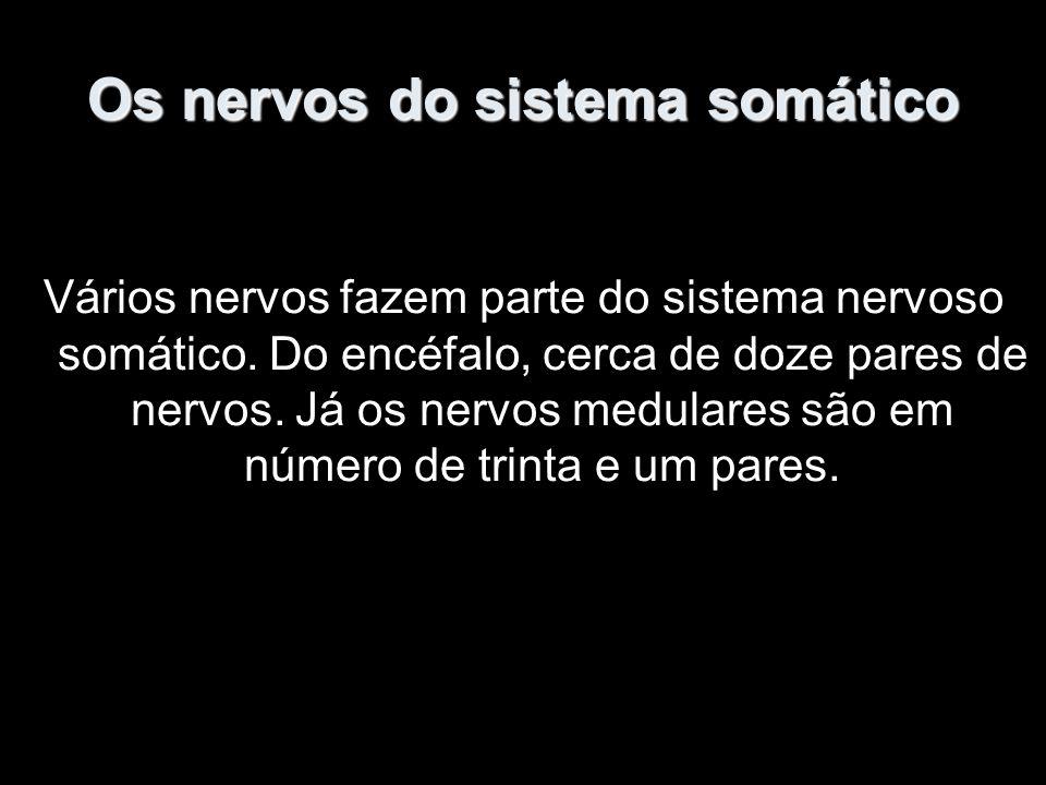 Os nervos do sistema somático Vários nervos fazem parte do sistema nervoso somático.