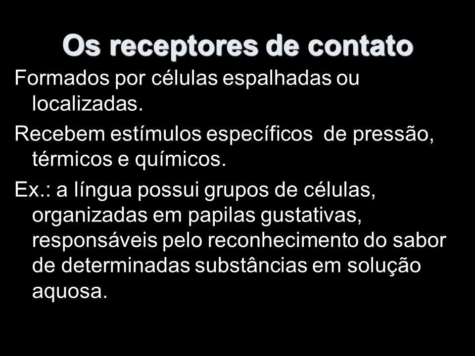 Os receptores de contato Formados por células espalhadas ou localizadas.