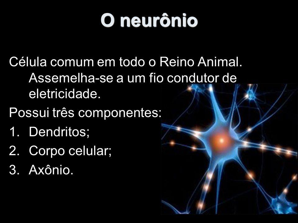 O neurônio Célula comum em todo o Reino Animal.Assemelha-se a um fio condutor de eletricidade.