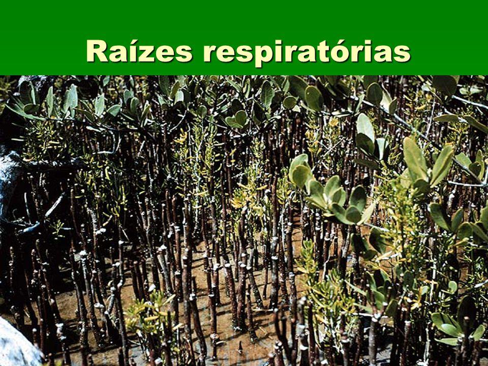 Raízes respiratórias