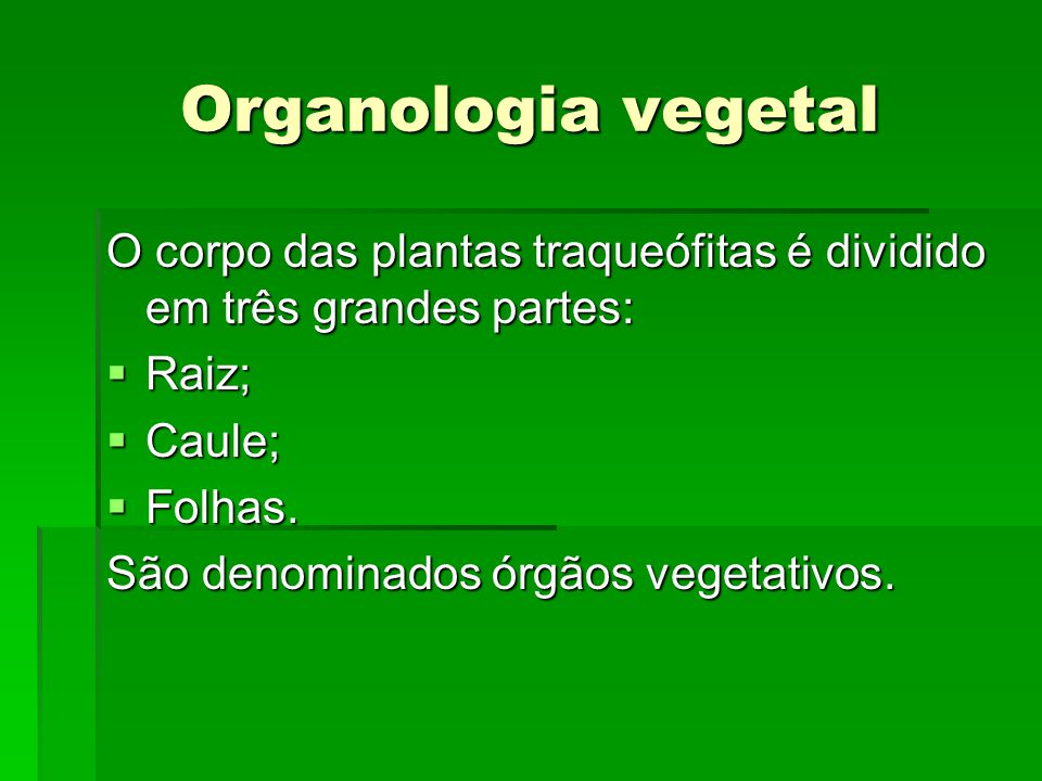 Organologia vegetal O corpo das plantas traqueófitas é dividido em três grandes partes:  Raiz;  Caule;  Folhas. São denominados órgãos vegetativos.