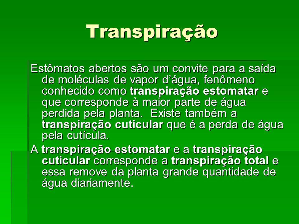 Transpiração Estômatos abertos são um convite para a saída de moléculas de vapor d'água, fenômeno conhecido como transpiração estomatar e que correspo