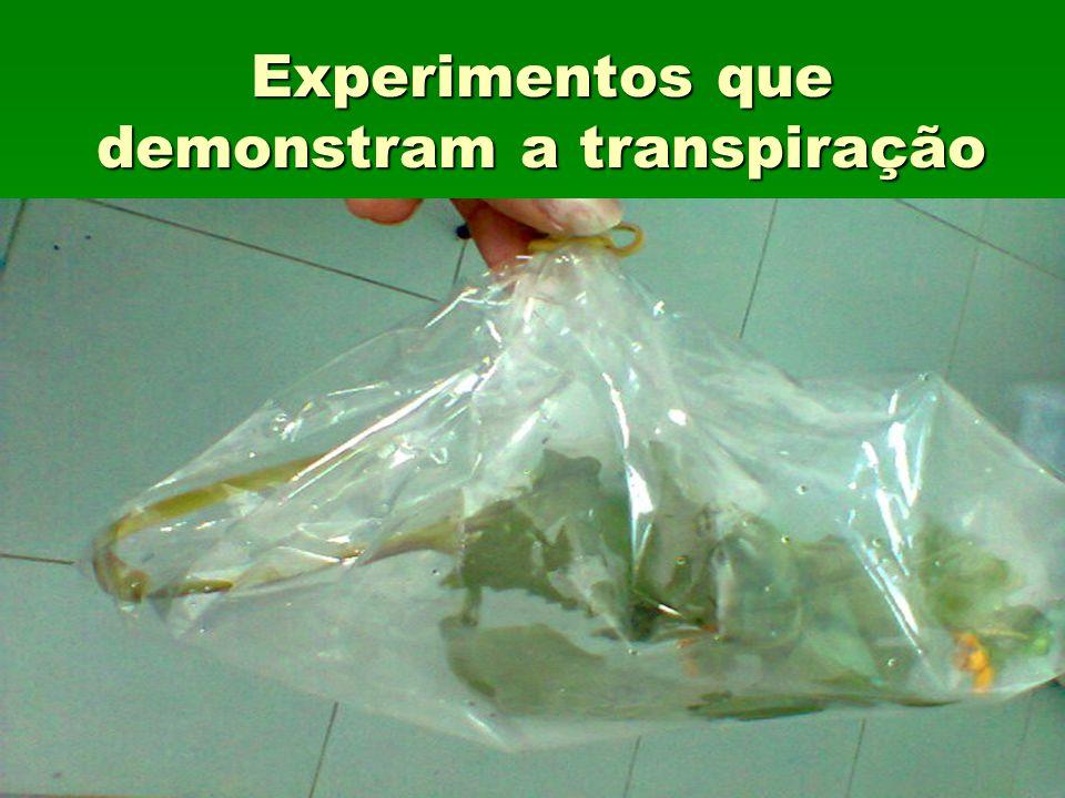 Experimentos que demonstram a transpiração