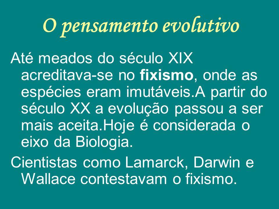 O pensamento evolutivo Até meados do século XIX acreditava-se no fixismo, onde as espécies eram imutáveis.A partir do século XX a evolução passou a se