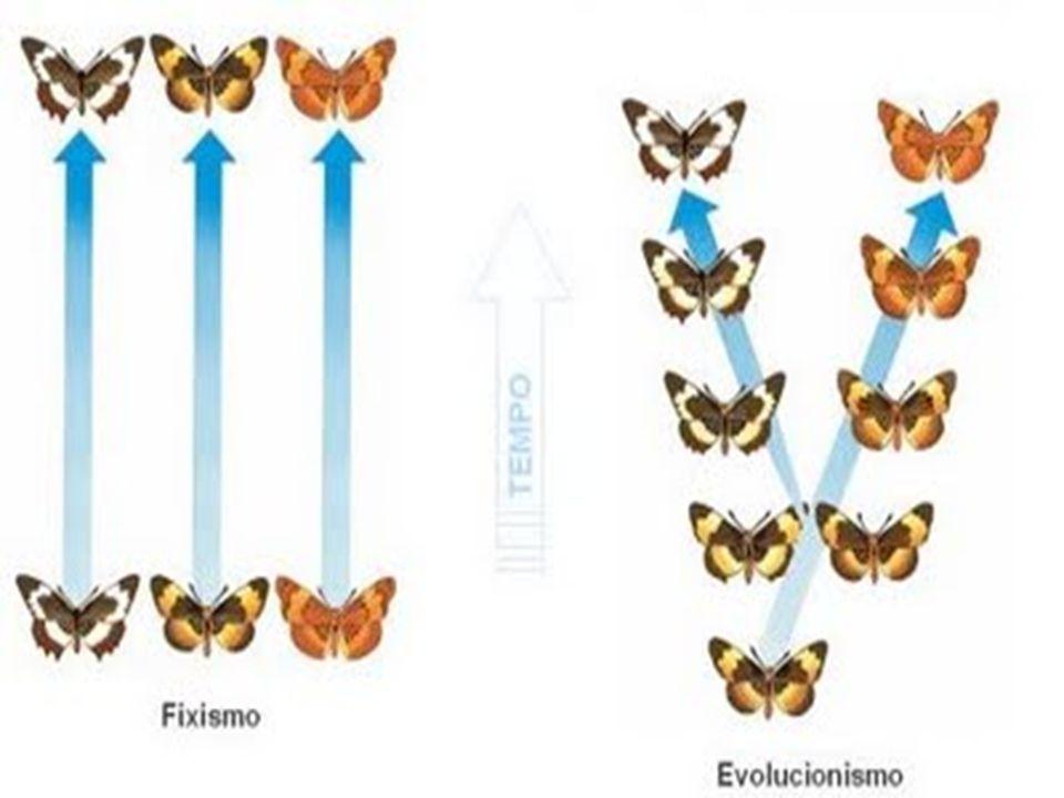 Evidências evolutivas Homologia A teoria evolutiva se fundamenta a partir do estudo comparativo dos organismos, sejam eles fósseis ou atuais.