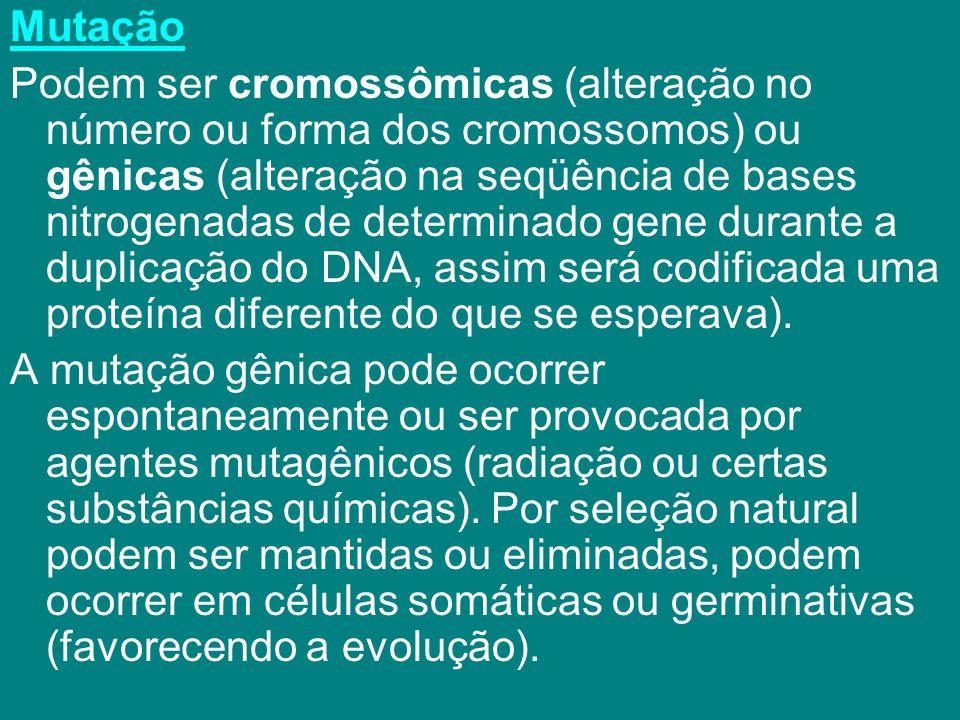 Mutação Podem ser cromossômicas (alteração no número ou forma dos cromossomos) ou gênicas (alteração na seqüência de bases nitrogenadas de determinado