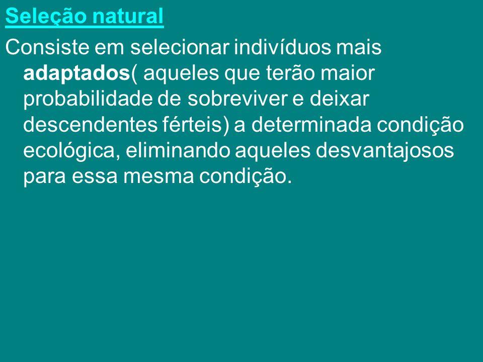 Seleção natural Consiste em selecionar indivíduos mais adaptados( aqueles que terão maior probabilidade de sobreviver e deixar descendentes férteis) a