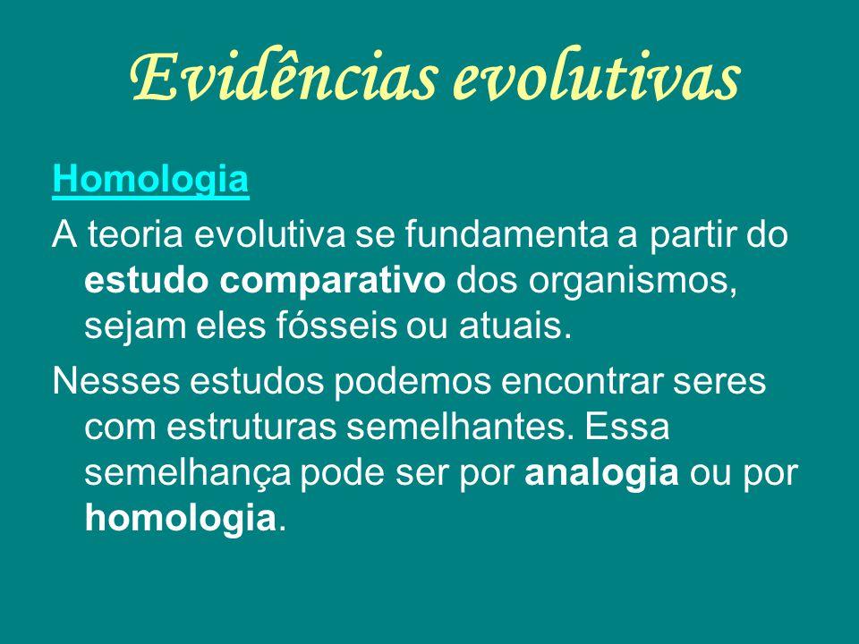 Evidências evolutivas Homologia A teoria evolutiva se fundamenta a partir do estudo comparativo dos organismos, sejam eles fósseis ou atuais. Nesses e