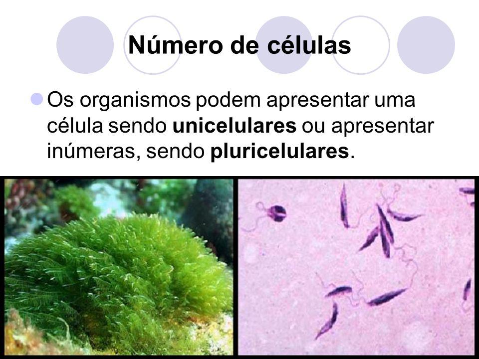 Número de células Os organismos podem apresentar uma célula sendo unicelulares ou apresentar inúmeras, sendo pluricelulares.