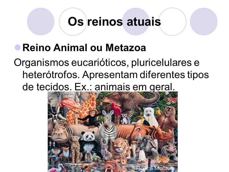 Os reinos atuais Reino Animal ou Metazoa Organismos eucarióticos, pluricelulares e heterótrofos. Apresentam diferentes tipos de tecidos. Ex.: animais