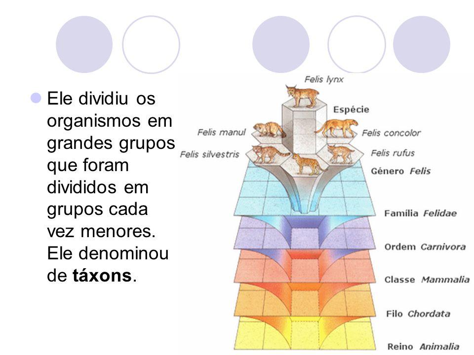 Ele dividiu os organismos em grandes grupos que foram divididos em grupos cada vez menores. Ele denominou de táxons.