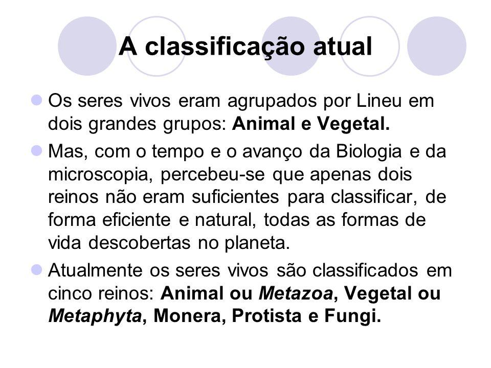 A classificação atual Os seres vivos eram agrupados por Lineu em dois grandes grupos: Animal e Vegetal. Mas, com o tempo e o avanço da Biologia e da m