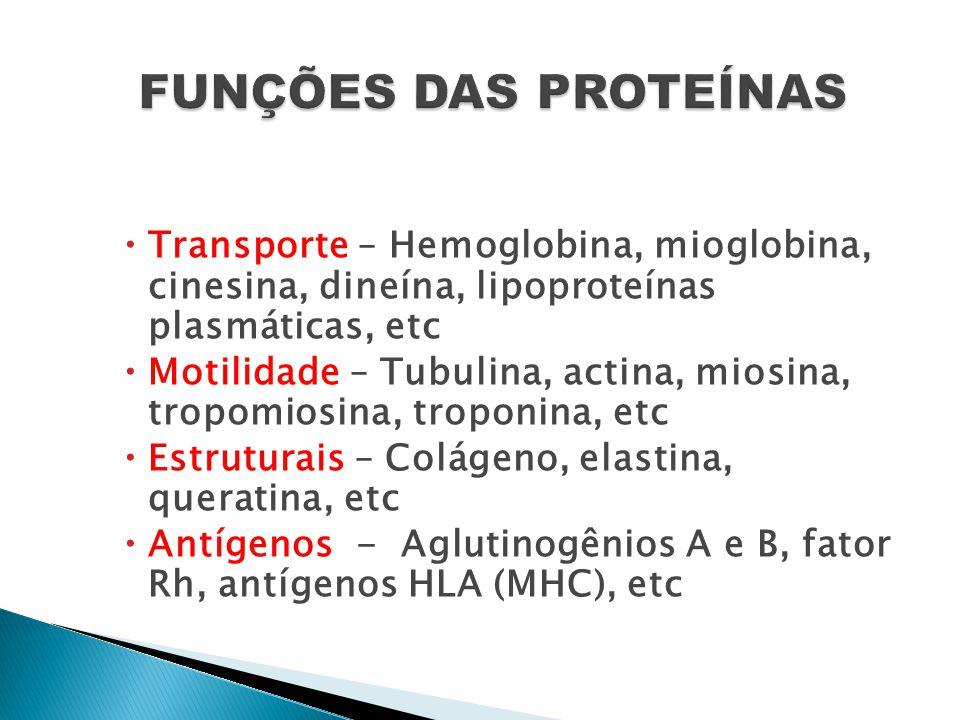  Transporte – Hemoglobina, mioglobina, cinesina, dineína, lipoproteínas plasmáticas, etc  Motilidade – Tubulina, actina, miosina, tropomiosina, trop